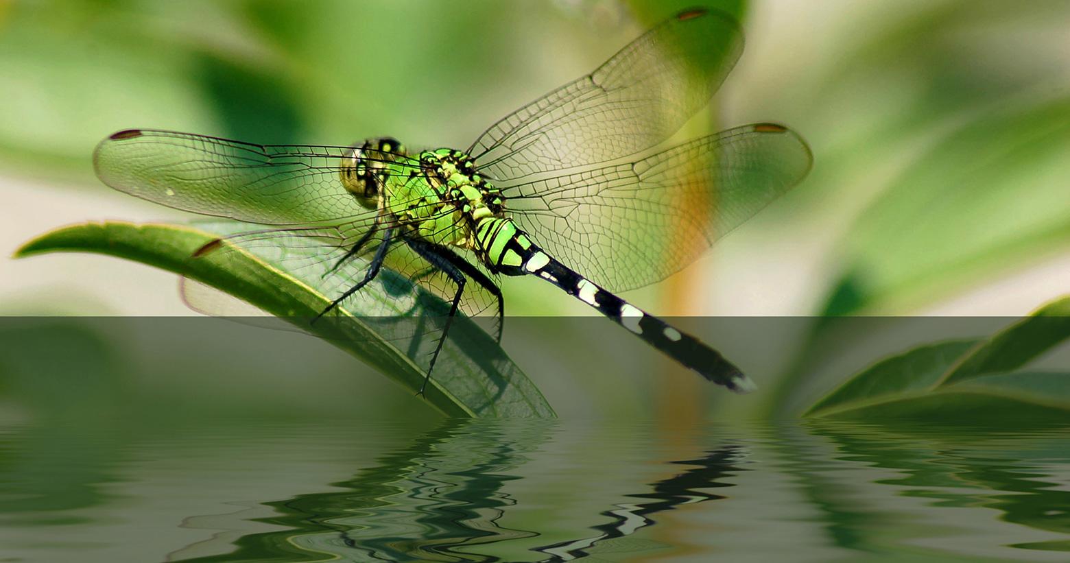 H2a-libelle
